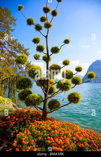 Beautiful decorative tree on lake and mountains background. - Stock Image
