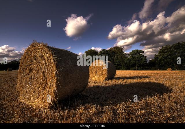 Hay Bales, Cheshire Countryside, Grappenhall, Warrington Cheshire WA4 2PL - Stock Image