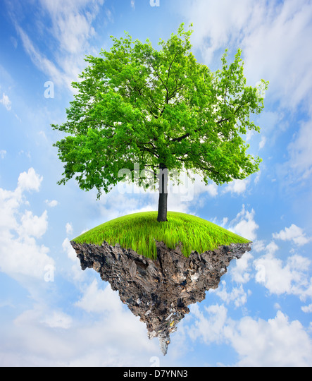 Green tree on part of a land - Stock Image