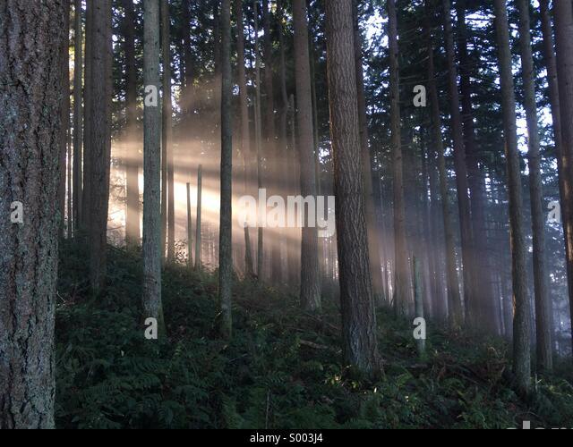 Forest sunlight - Stock Image