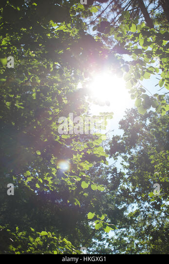 lens flare through tree leaves. lush, green, nature, environment. - Stock Image