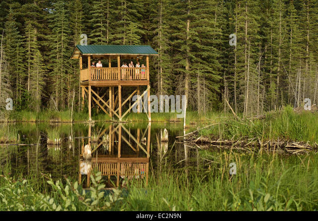 The wildlife viewing tower at the Beaver Boardwalk in Hinton Alberta - Stock Image