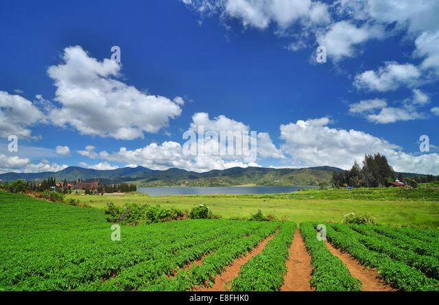 Indonesia, West Sumatra, Solok, Alahan Panjang, Clouds over field - Stock Image
