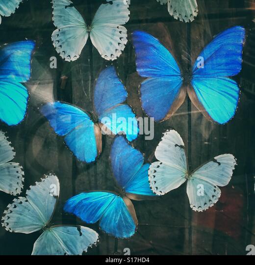 Blue butterflies - Stock-Bilder