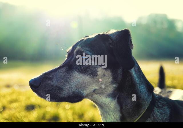 Dog portrait with luminous blurred background - Stock Image