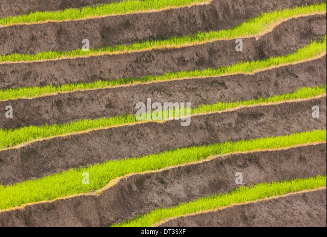 Cultivated terraced fields, Paro Valley, Bhutan - Stock Image