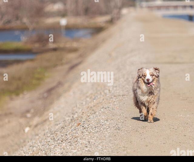 Agile Training For Dogs Tube