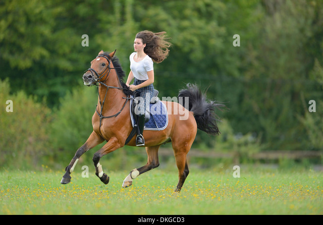 Mecklenburger stallion amateur