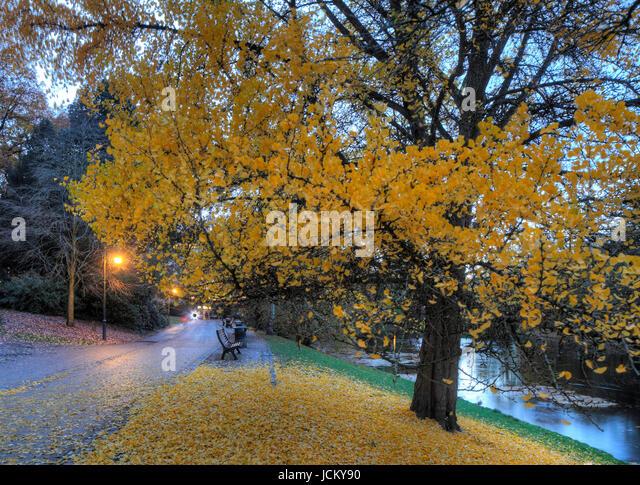 Walk and Tree in Park Wallanlagen in Autumn at Dusk, Bremen, Germany, Europe  I Weg und Verfaerbter Baum in den - Stock-Bilder