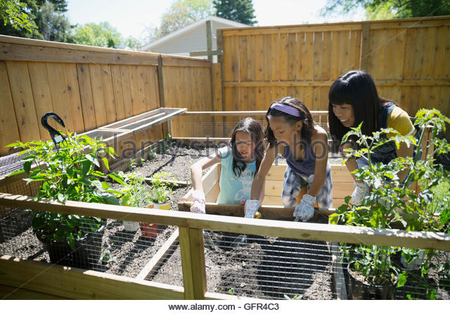 Mother and daughters gardening in sunny backyard - Stock Image