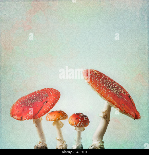 Vintage background with fly agaric - Stock-Bilder