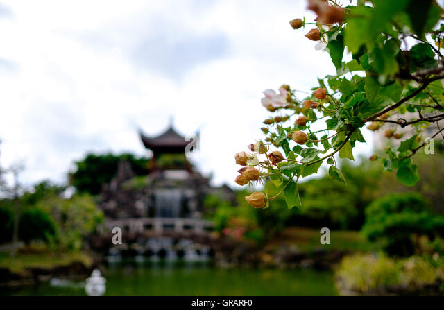 Low Angle View Of Flowers Blooming At Park - Stock Image