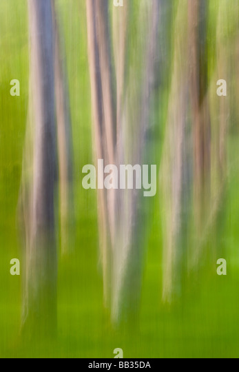 Alder tree abstract. - Stock Image