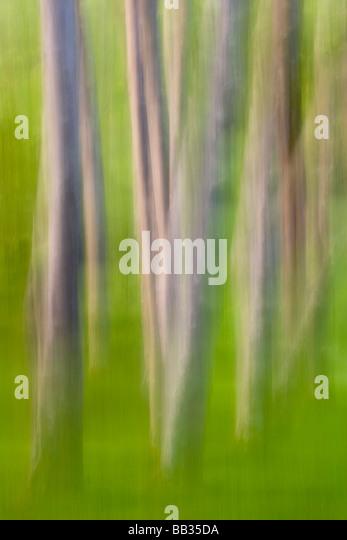 Alder tree abstract. - Stock-Bilder