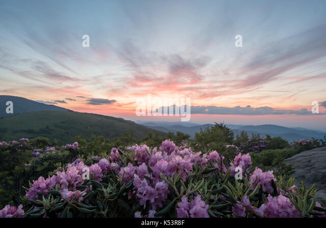 Pale Pink Sky Mirrors Pink Rhododendron in Appalachian mountains - Stock Image