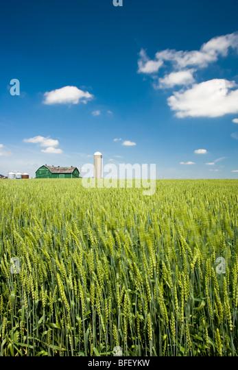 Farm, East Gwillimbury, Ontario, Canada - Stock Image