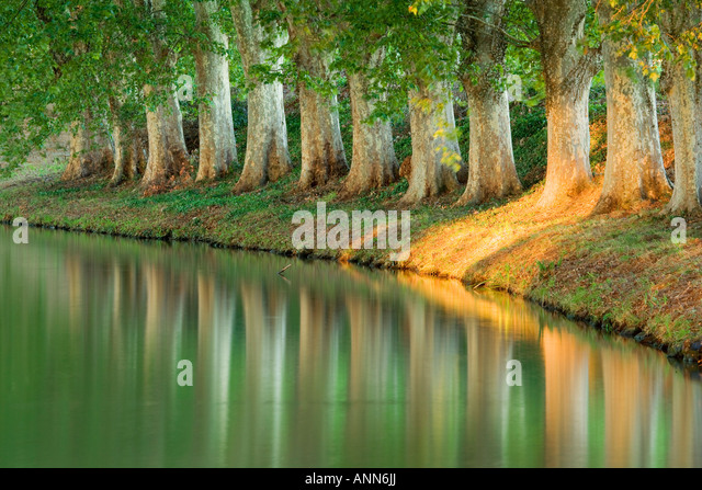 France Languedoc Roussillon Nr Carcassonne Canal du midi - Stock Image
