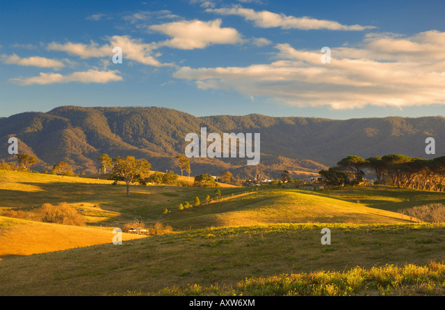 Pasture, Bega, New South Wales, Australia, Pacific - Stock Image