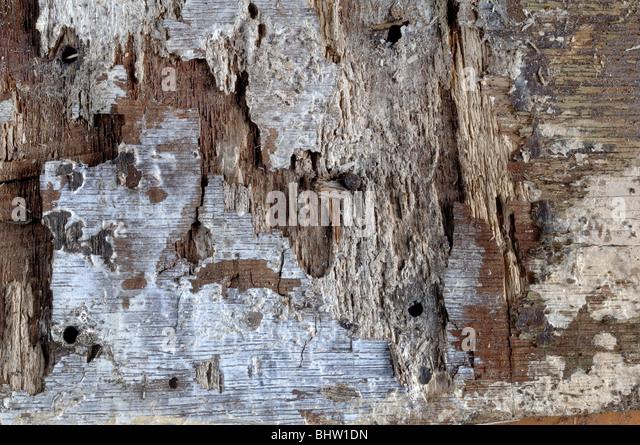 Rotten Wood - Stock-Bilder