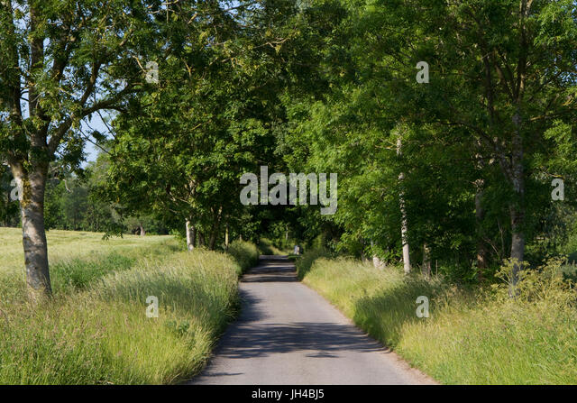 An empty Suffolk lane on a summer's day - Stock Image