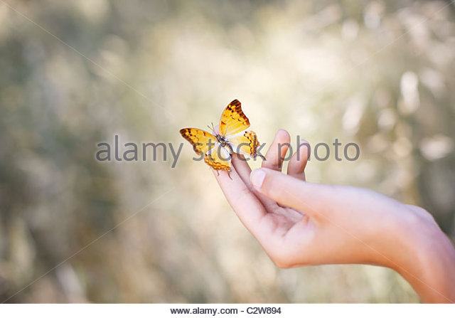 Butterfly perched on woman's hand - Stock Image