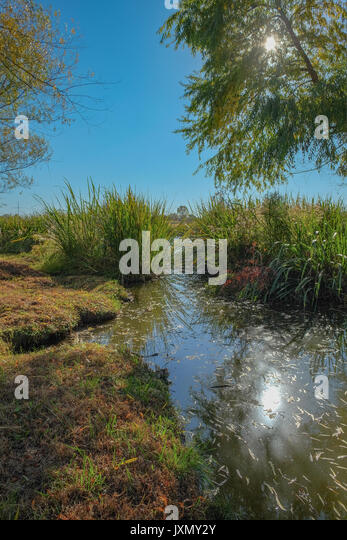 A small finger of the lake at the Blount Cultural Park in Montgomery, Alabama, USA, with towering trees, reeds, - Stock Image