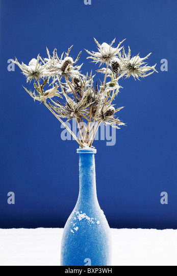 Frost and snow covered thistles, Outdoor Still-Life. - Stock Image