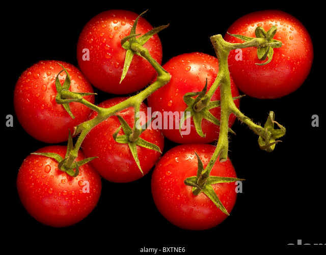 a bunch of seven juicy red vine tomatoes on a black background - Stock Image