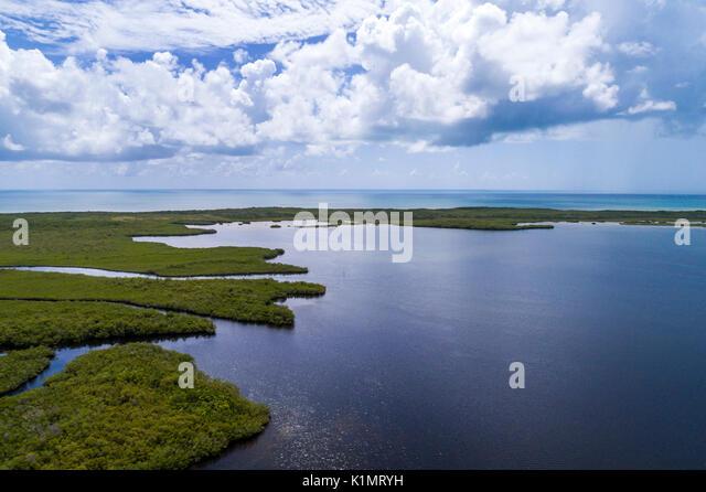 Florida Florida Keys Upper Key Largo Largo Sound John Pennekamp Coral Reef State Park mangrove trees Atlantic Ocean - Stock Image