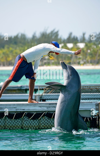 Man with dolphin at the Dolphin Explorer centre, Punta Cana, Dominican Republic - Stock Image