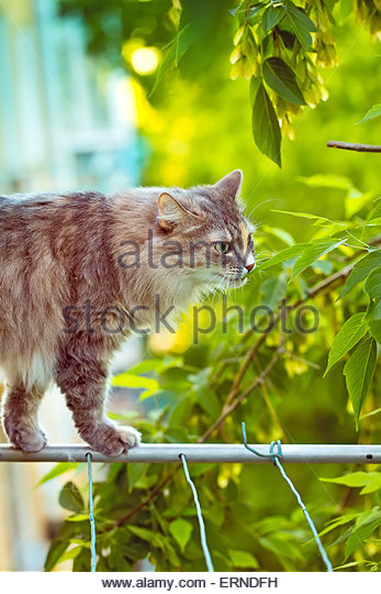 Breed White F Stock Photos Amp Breed White F Stock Images
