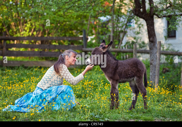 Woman with a Donkey (Equus asinus) foal in an orchard, Upper Bavaria, Bavaria, Germany, Europe - Stock Image