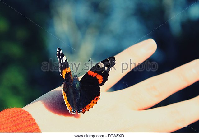 Cropped Image Of Hand Holding Butterfly - Stock Image