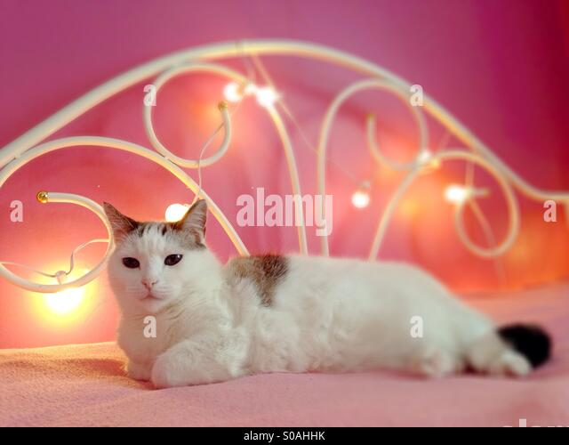 A cute, white cat on a pink bed. - Stock Image