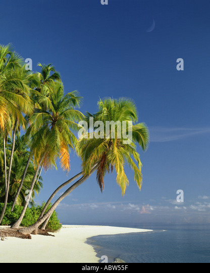 MV - MALDIVE ISLANDS: Beach along the Indian Ocean - Stock-Bilder
