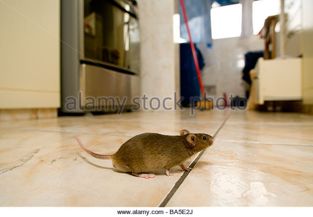 Mouse in kitchen - Stock-Bilder