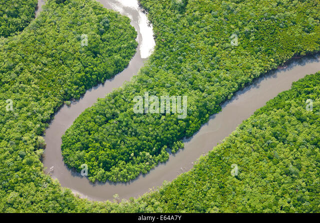 Aerial view of rain forest, Daintree River, Daintree National Park, Queensland Australia - Stock Image