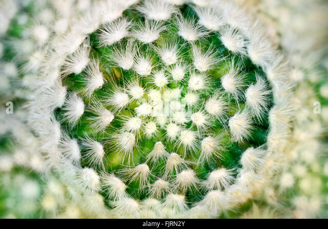 Plants and trees: cactus close-up, abstract floral pattern - Stock Image
