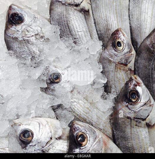 Dorada Fish At A Market In Spain - Stock Image