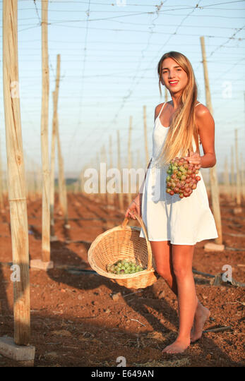 Young teen girl during harvest Model release available - Stock Image