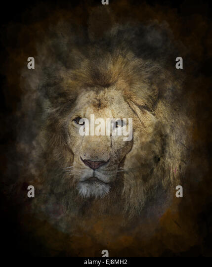 Watercolor Image Of Lion - Stock-Bilder
