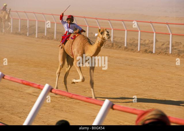 Oman Camel Racing Stock Photos & Oman Camel Racing Stock ...