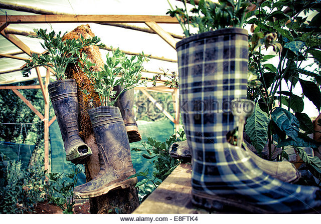 Costa Rica, View of garden of organic vegetables with rubber boots - Stock Image