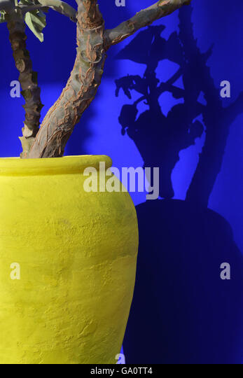 Plant in a yellow pot against blue wall. - Stock Image