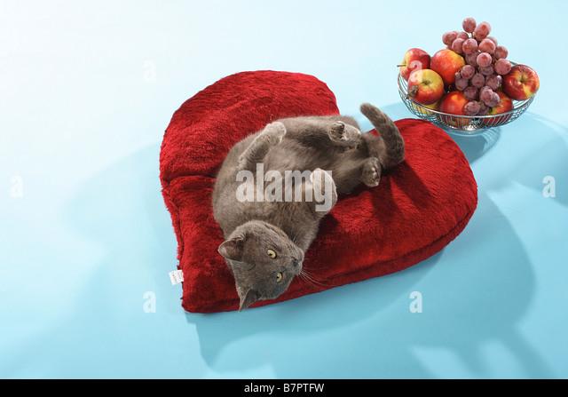 Heart Pillow Stock Photos Amp Heart Pillow Stock Images Alamy