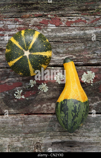 Different shapes of squash - Stock Image