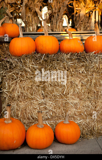 Autumn pumpkins around hay bale display - Stock Image