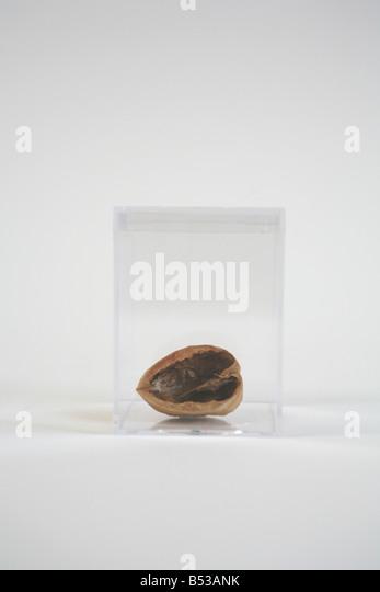 an empty half walnut shell - Stock Image