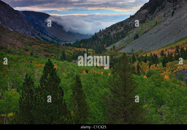 Early fall color dots the aspens in Lundy Canyon located just north of Lee Vining, California, USA. - Stock Image