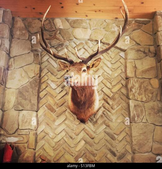 Deer head on a wall. - Stock Image